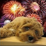 Keeping Your Pets Calm During Firework Displays